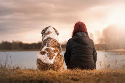CBD Dosage for Pets